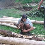 L'écorçage du bois.
