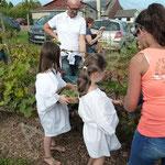 Les enfants entrent dans les rangs de vignes pour cueillir le raisin des Rues des Vignes.