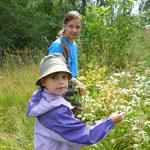 Маша и Варя собирают малину