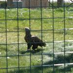 В зоопарке живет очень много птиц. Они находятся в больших куполообразных сетчатых вольерах.