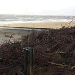 Enorme Treibselansammlungen - am Strand und im Watt steht wohl keine Pricke mehr