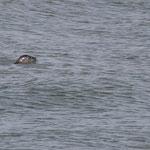Aus der Ferne leicht mit einem Schwimmer zu verwechseln / © Freiwillige Feuerwehr Cuxhaven-Duhnen