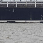 Beobachter der Übungen im Amerikahafen - ein Seehund © Freiwillige Feuerwehr Cuxhaven-Duhnen