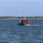 Das Dritte und Letzte Pferd © FF.Cuxhaven-Duhnen