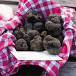 truffe marché au truffes de lalbenque dans le lot en Quercy location famille - venez voir pour vos vancances