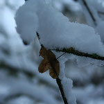 duvet de neige pour la foret
