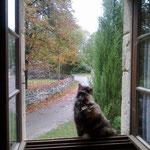 c'est beau un chat sur un rebord de fenêtre !