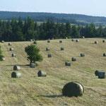 Récolte du foin pendant l'été