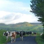 Départ pour la montagne de Sausse au mois de juin. Les vaches seront de retour à Montaleix au mois de septembre.