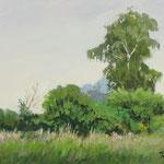 2017, Łąka, Meadow, Wiese, olej na płycie, 25.5 x 34 cm.