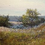 2014, Łąka, Meadow, olej na płótnie lnianym, 30 x 40 cm.