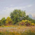 2014, Łąka, Wiese, Meadow, olej na kartonie, 30 x 40 cm.  夏