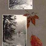 paysage d'Alsace et feuilles séchées