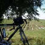 dans la plaine ouzbèke, face à un champ de coton