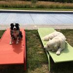 Obi op vakantie bij Basil in Kessel.
