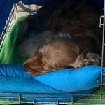 Hoe zwaar kan het leven van een hondje zijn ???