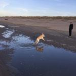 Wandeling met Ischa op het strand van Zeeland.
