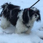 ook in de sneeuw gaat Nisha op wandel. Wel koud aan haar pootjes...en de sneeuw blijft in haar haren plakken.
