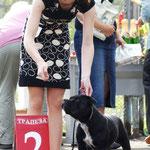 Staffordshire Bull Terrier Sonrisa Feliz Alegria El Sol (1year)