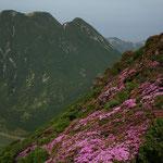 平治岳南峰下り斜面より三俣山を望む
