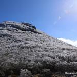 三俣山本峰・南峰鞍部より南峰の樹氷