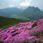 ミヤマキリシマと九重連山
