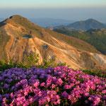 ミヤマキリシマと星生山 ※湧蓋山(右奥)