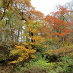 紅葉した森Ⅰ