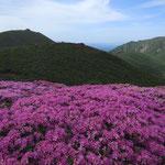ミヤマキリシマと大船山
