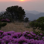 朝日とミヤマキリシマ(黒岩山)