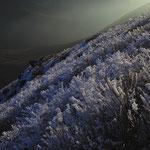 中岳北斜面の霧氷
