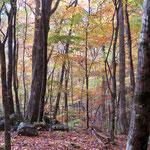 紅葉した森Ⅱ