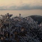 日没前の樹氷