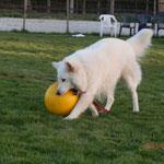 Der war auch ganz schön mit anzusehen-mußte aber einen anderen Ball..