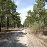 Pinienwälder bei Siete Iglesias