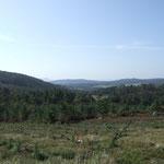 das grüne Galicia