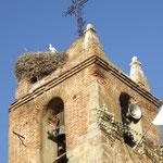 Einer von vielen Kirchtuermen mit den unvermeidlichen Storchennestern