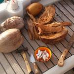 Kokosnüsse gibt es im Überfluss
