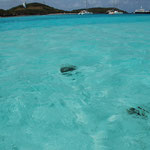Schildkröten und Rochen sind von Bord aus nicht zu unterscheiden