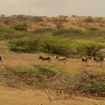 Ausgemusterte Esel trifft man überall.... Überreste vergangener Zeiten