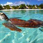 Tahiti / Französisch Polinesien