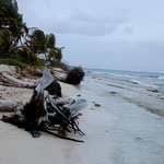 Stillleben auf Palm-Island