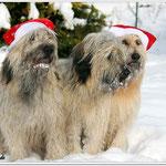 die Weihnachtshunde