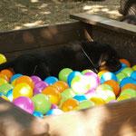 Unsere Sandkiste gefüllt mit Plastikbällen