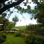 Blick übers Land auf alten Birnbaum und Pferdekoppel