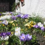 Frühling in Waltersdorf