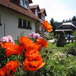 Blütenbracht am Landhaus