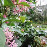 Botanischer Garten in Liberec