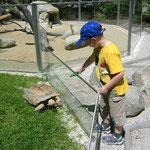 Ganz nah bei den Tieren im Reichenberger Zoo
