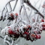 der erste Frost in Waltersdorf